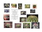 Cây cảnh, cây hoa cảnh part 2