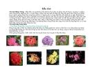 Cây cảnh, cây hoa cảnh part 4