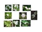 Cây cảnh, cây hoa cảnh part 5