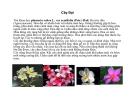 Cây cảnh, cây hoa cảnh part 6