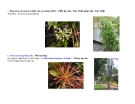 Cây cảnh, cây hoa cảnh part 9