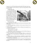 Giáo trình đại cương về chẩn đoán lâm sàn thú y về hình thức và mức độ của những rối loạn trong cơ thể bệnh p3