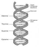 Báo cáo: Đại cương về di truyền tế bào học