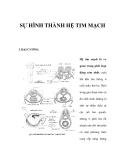 SỰ HÌNH THÀNH HỆ TIM MẠCH