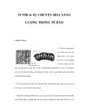 TI THể & SỰ CHUYỂN HOÁ NĂNG LƯỢNG TRONG TẾ BÀO