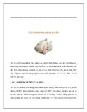 Giáo án giảng dạy khối lớp Lá: Giá trị dinh dưỡng của thịt gia cầm