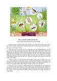 Sinh thái học nông nghiệp : Quần xã sinh vật part 2