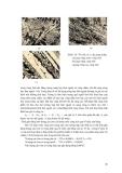 Giáo trình hướng dẫn phân tích cấu tạo mạng tinh thể lý tưởng của kim loại nguyên chất p10