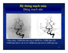 Giải phẫu thần kinh đối chiếu chẩn đoán Hình ảnh part 5