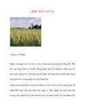 CHIẾC MÁY GẶT LÚA(Truyện cổ Pháp)