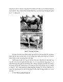 Công nghệ chăn nuôi : GIỐNG VÀ CÔNG TÁC GIỐNG VẬT NUÔI part 8