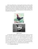 Công nghệ chăn nuôi : GIỐNG VÀ CÔNG TÁC GIỐNG VẬT NUÔI part 9