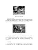 Công nghệ chăn nuôi : GIỐNG VÀ CÔNG TÁC GIỐNG VẬT NUÔI part 10