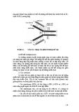 Giáo trình Công nghệ Protein part 2