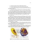 Giáo trình di truyền học và vi sinh vật ứng dụng part 2