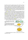 Giáo trình di truyền học và vi sinh vật ứng dụng part 9