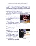 Giáo trình bệnh nội khoa gia súc part 4