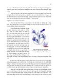THỰC HÀNH  ĐỘNG VẬT HỌC (PHẦN HÌNH THÁI – GIẢI PHẪU) part 2