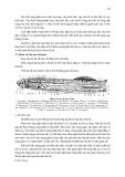 THỰC HÀNH  ĐỘNG VẬT HỌC (PHẦN HÌNH THÁI – GIẢI PHẪU) part 6