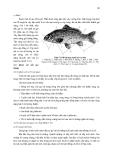 THỰC HÀNH  ĐỘNG VẬT HỌC (PHẦN HÌNH THÁI – GIẢI PHẪU) part 7