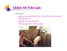 Bài giảng châm cứu thú y part 10