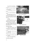 Giáo trình chẩn đoán và nội khoa thú y part 1