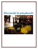 Flavonoids là polyphenols