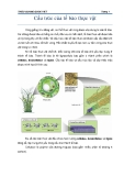 Cấu trúc của tế bào thực vật