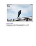 Giáo trình hướng dẫn cách tạo ảnh phông nền bằng phương pháp sử dụng bộ lọc filter gallery p7