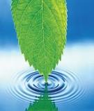 Bài giảng mô hình hóa môi trường - ( Bùi Đức Long ) chương 8