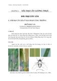 Sâu hại cây lương thực - lúa, bắp, khoai : Sâu hại cây lúa part 1