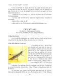 Sâu hại cây lương thực - lúa, bắp, khoai : Sâu hại cây lúa part 4