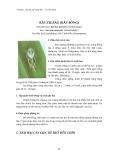 Sâu hại cây lương thực - lúa, bắp, khoai : Sâu hại cây lúa part 10