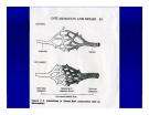 Bài giảng bệnh lý học thú y : Viêm - inflammatio part 3