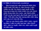 Bài giảng bệnh lý học thú y : Phân loại viêm part 2