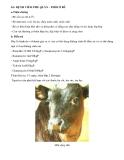 Các bệnh thường gặp ở bò sữa part 4