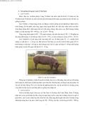 Kỹ thuật chăn nuôi lợn nái sinh sản part 2