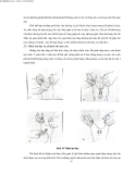 Kỹ thuật chăn nuôi lợn nái sinh sản part 8