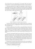 Giáo trình chăn nuôi dê part 6