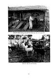 Giáo trình chăn nuôi dê part 8