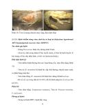 NUÔI THÂM CANH TÔM ĐẢM BẢO AN TOÀN VỆ SINH THỰC PHẨM THEO MÔ HÌNH GAqP part 4