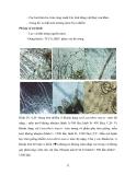NUÔI THÂM CANH TÔM ĐẢM BẢO AN TOÀN VỆ SINH THỰC PHẨM THEO MÔ HÌNH GAqP part 5