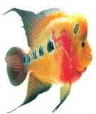 Các loại thức ăn cho cá La Hán