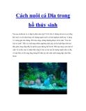 Cách nuôi cá Dĩa trong hồ thủy sinh
