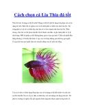 Cách chọn cá Lia Thia đá tốt