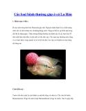Các loại bệnh thường gặp ở cá La Hán
