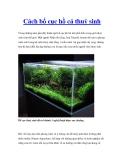 Cách bố cục hồ cá thuỷ sinh