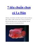 7 tiêu chuẩn chọn cá La Hán