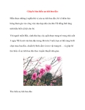 Giúp bé tìm hiểu sự tích hoa đào