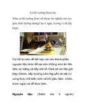 Cá hồi nướng khoai tây